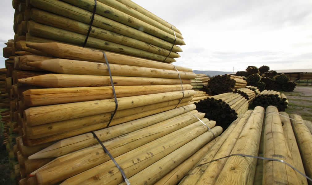 Treated wood products logs
